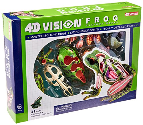 立体パズル 4D VISION 動物解剖 No.05 カエル解剖モデル