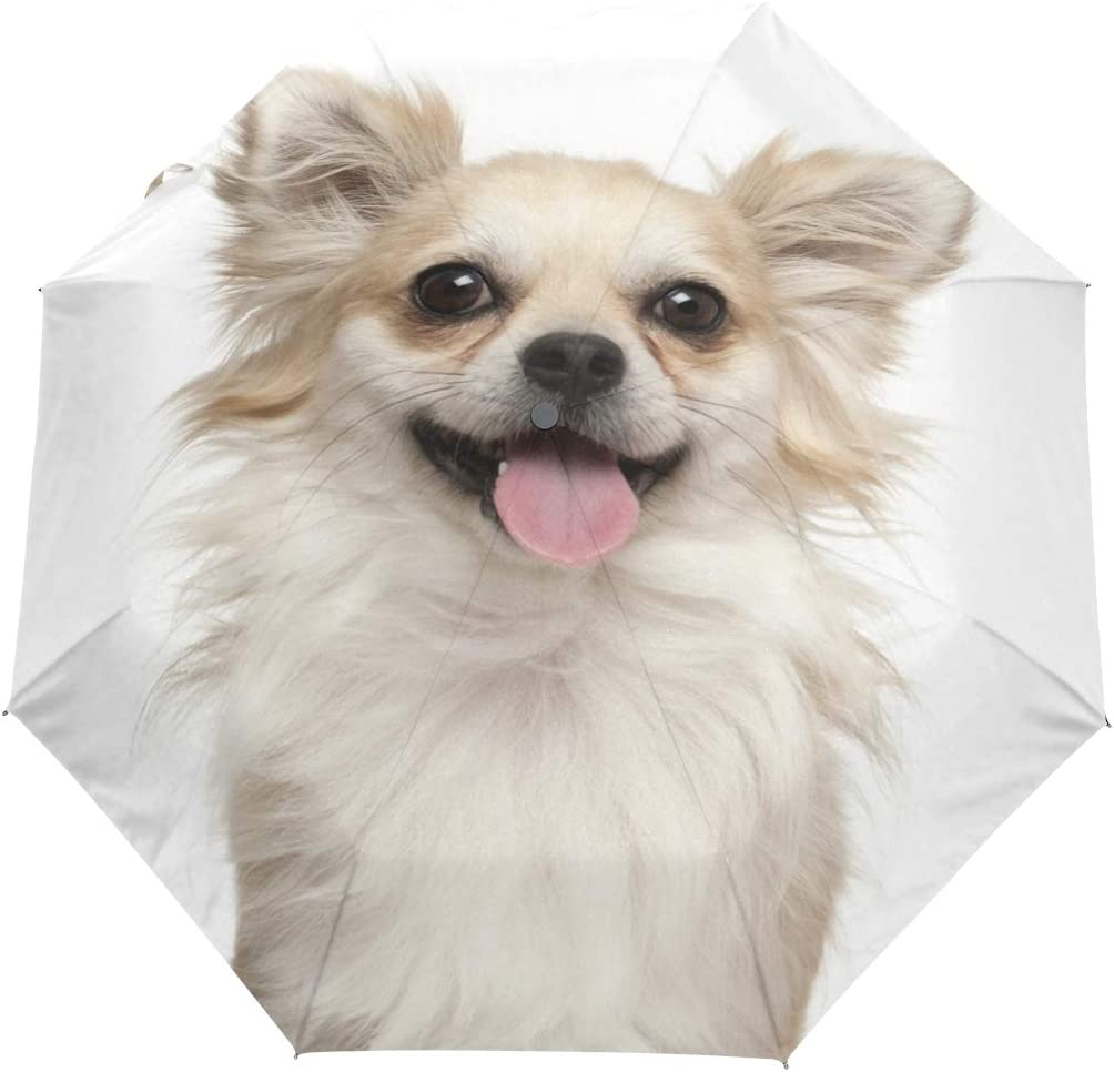 My Daily Cute Chihuahua Dog Travel Open Close Anti Auto Umbrella Max 42% New Shipping Free Shipping OFF