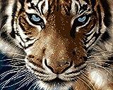 RIHE Sin Marco, Pintura por números Bricolaje DIY Pintura al óleo Vistoso Tigre Impresión de la Lona Mural Decoración hogareña
