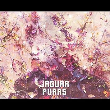 Jaguar Purrs