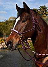 Kensington Protective Products Side Pull Rope Training Halter with Double Filled Nylon Cord, Braided Nose
