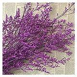 KXLBHJXB 25-30 g/Bundle, 15-35CM Liebhaber Gras Natürliche Frische Getrocknete Konservierte Tanzen Blumen, Echt Immer Blume Gras Niederlassung for Hauptdekor Getrocknete Blumen (Color : 09)