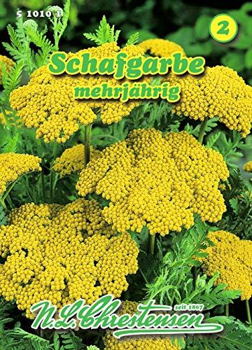 Achillea filipinus, Schafgarbe gelb, mehrjährig N.L.Chrestensen Samen 510101-B