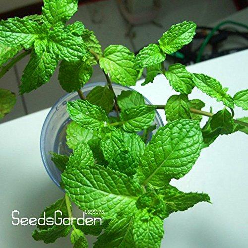 Promotion! Graines Aromatique plantes Parfum menthe Balcon Potted Herb Mint Seeds DIY jardin 200 Pièces / sac, # 2BRHPX