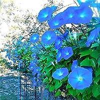 100 個朝顔の種目を引く登山つる花の種ホームガーデン植栽ユニークなガーデニング風景