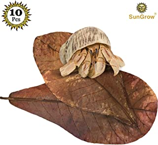 "Hermit Crab Leaves - Pack of All Natural Dried Leaves for Added Humidity - Delicious Crab Treat and Source of Cellulose - Organically Grown Plant Approx. 10"" Long - Fun Hiding Place"