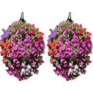 Pack Long Hanging Planters planting