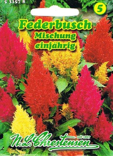 Federbusch Mischung , einjährig, Farbenfroh, dekorativ, Rabatten-, Balkon- und Topfpflanze 'Celosia argentea plumosa'