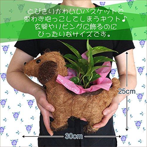 わんわんバスケット観葉植物ポトスフラワーギフト鉢植え3号ポット
