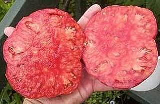 soldacki tomato plants