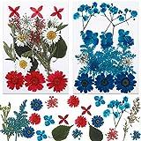 MWOOT DIY Basteln Getrocknet Blüten, 42 Stück Mischung Blumen Blütenblätter, Blau Rot Weiß...