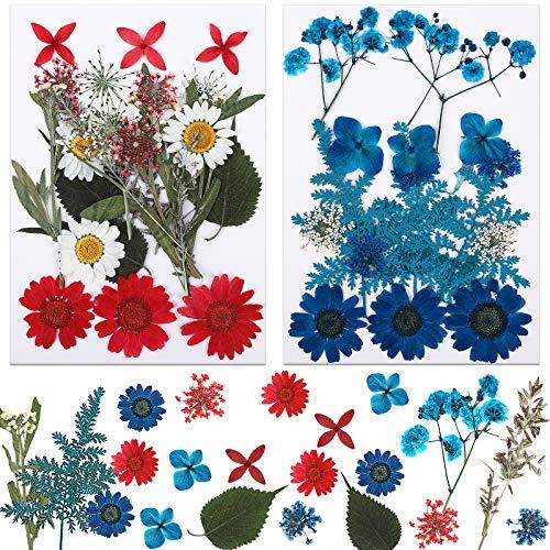 MWOOT DIY Basteln Getrocknet Blüten, 42 Stück Mischung Blumen Blütenblätter, Blau Rot Weiß Gepresst Blüten für Seifen Harz Anhänger Herstellung Deko, Dried Flowers