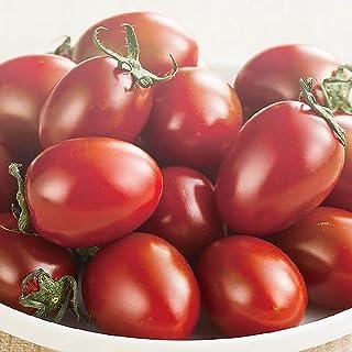 チョコアイコ 高糖度ミニトマトの苗【10.5cmポット 野菜 自根苗/2個セット】●アイコシリーズに茶色のミニトマト「チョコアイコ」が仲間入りしました。種子の生産量がまだ少ない品種です。プラム型の多収穫・高糖度ミニトマト! 酸味が少ないのでお子...