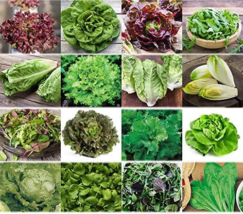 Salate Saat 16 x 100 Saatgut Salat Mix 100% Natursamen handverlesen aus Portugal, seltene und alte Sorten, Samen mit hoher Keimrate, Salatsamen für Garten, Balkon, Terrasse, Gewächshaus