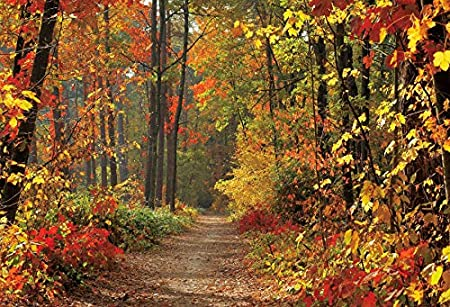 OERJU 5x4ft Nature Fall Backdrop Wild Forest Red Leaves Green Trees Woodland Paths Sunshine Photography Background Holiday Relax Boys Girls Adults Portrait Photo Studio Props Vinyl Wallpaper