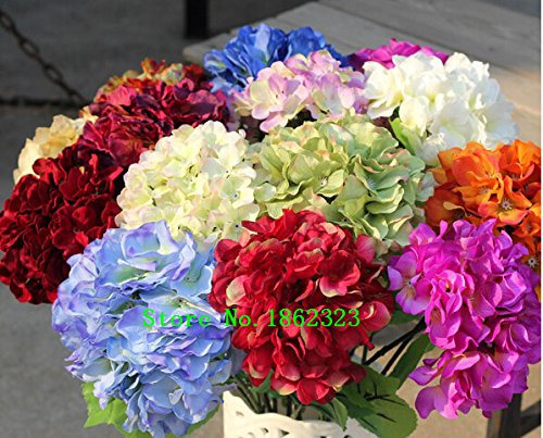 Hot Plants de! Graines Multi Color Hydrangea Graines de Charme Fleur chinoise Bonsai pour Garden Prix de gros Livraison gratuite