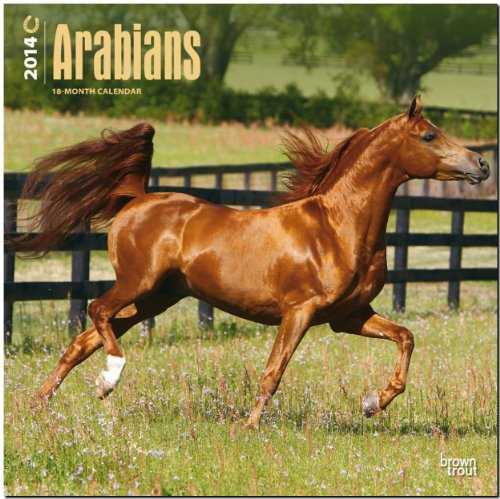 Arabians 2014 - Araber: Original BrownTrout-Kalender [Mehrsprachig] [Kalender]