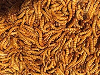 Predator Foods Bulk Live Mealworms - 500 Count