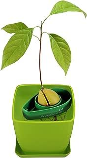 AvoSeedo Bowl Set Grow Your Own Avocado Tree, Evergreen, Perfect Avocado Tree Growing Kit for Every Avocado Lover with Plan Pot - Green & Green