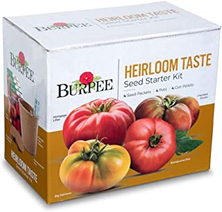 bulk tomatoes for sale
