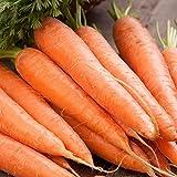 Scarlet Nantes Carrot...image