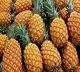 Nema Dwarf pineapple seeds - 100 Pcs