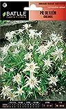 Semillas de Flores - Pie de