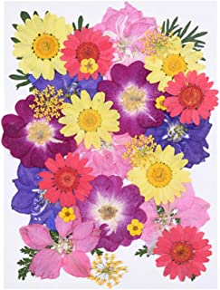 Milisten 30pcs Real Dried Pressed Flowers,Pink Purple Larkspur,Daisy Natural Pressed Flowers for Scrapbooking DIY Candle R...