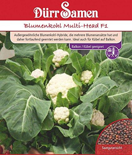 Dürr Samen 4261 Blumenkohl Multi-Head F1 (Kohlsamen)