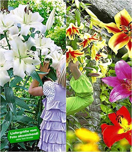 BALDUR-Garten Tree-Lily®-Kollektion 4 Farben 9 Stück Baumlilien Lilium winterhart