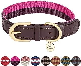 dog neck belt with name