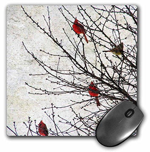 3dRose LLC 8 x 8 x 0.25 Inches Mouse Pad, Cardinals Photographed by Angel and Spot (mp_12387_1)