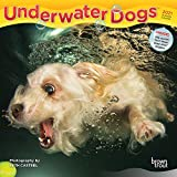 Underwater Dogs 2021 7 x 7 Inch Monthly Mini Wall Calendar, Pet Humor Puppy