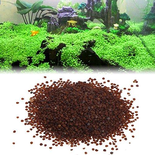 kofun acqua semi di piante ornamentali Acqua per acquario acquario Erba vordergrund Decor