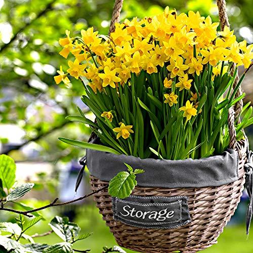 "25x Narcissus""Tête-à-Tête"" | 25er Set Blumenzwiebeln Narzissen | Osterglocken Zwiebeln | Blumenzwiebeln Frühblüher | Ø 10-11cm"