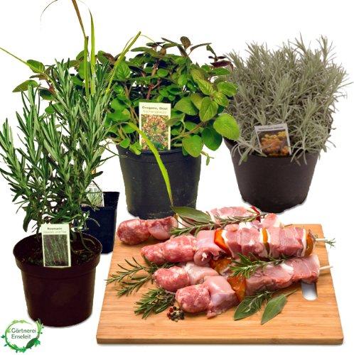 Grillkräuter-Set Rosmarin, Currykraut, Zitronengras & Oregano, frische Kräuter Pflanzen