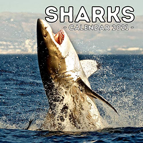 Sharks Calendar 2021: Cute Gift Idea For Sharks Lovers Men And Women