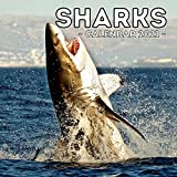 Sharks Calendar 2021: Cute Gift Idea For Sharks Lovers Men And Women