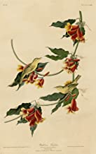 Berkin Arts John James Audubon Giclee Art Paper Print Art Works Paintings Poster Reproduction(Rathbone Warbler) #XZZ