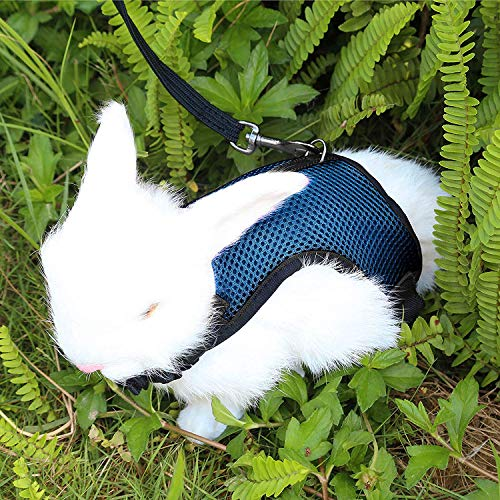 Pettom Bunny Rabbit Harness with Stretchy Leash Cute Adjustable Buckle Breathable Mesh Vest for Kitten Small Pets Walking (S(Chest:10.8-12.9 in), Blue)