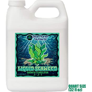 Liquid Seaweed for Plants (32 oz) Quart   Concentrated Liquid Kelp Supplement from Blue Planet Nutrients   Hydroponic Aeroponic Soil Coco Coir   for All Plants & Gardens
