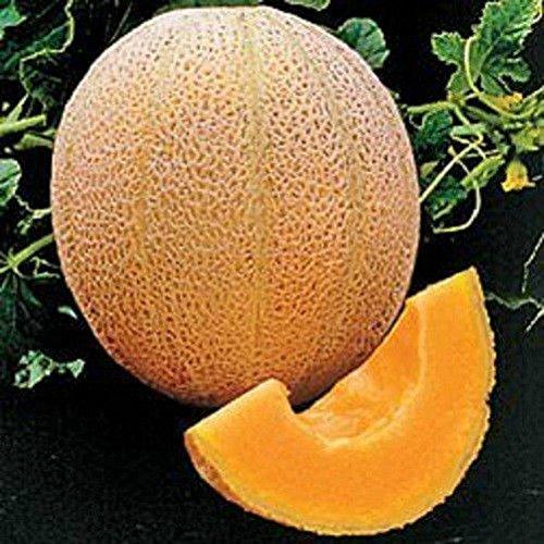 Semillas De Flores Direct Selling Novel Outdoor Plante Plantes Bonsai 2015 New Rare 80 Hales Meilleur cantaloup Graines de melon Jumbo