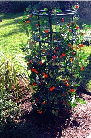 Clever Gardener Grow Cage
