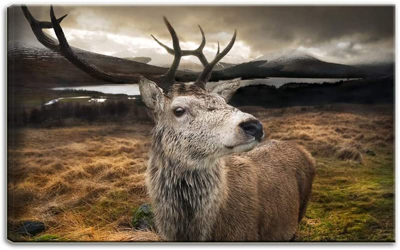 New products world's highest Credence quality popular Artsbay Animal Black and White Canvas Funny Wall Print Art Deer