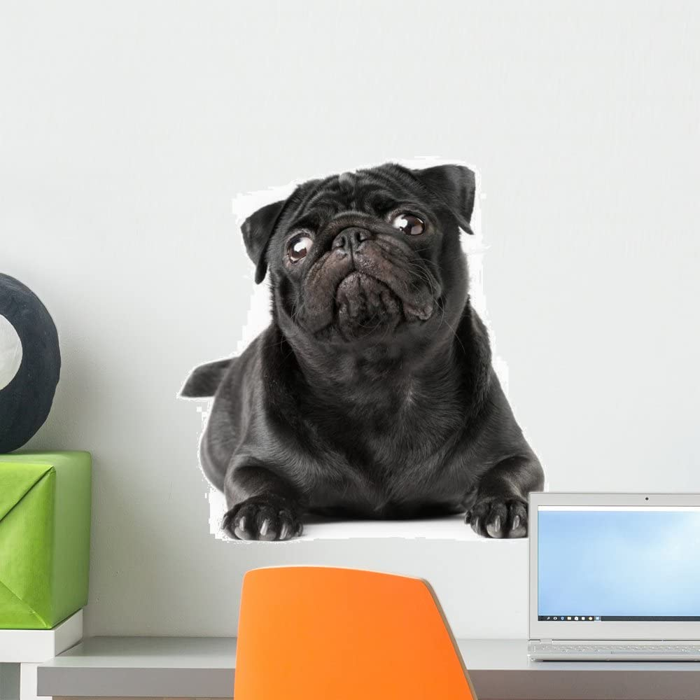 Wallmonkeys Black Pug Dog Background Wall Decal Peel And Stick Graphic Wm264630 18 In W X 12 In H Home Kitchen