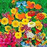 TOMASA Seedhouse- 220piezas de mezcla de flores silvestres crecen rápido, flores silvestres - Meadow Nature Flower Seed Blending Semillas perennes Flores aptas para balcón, jardín