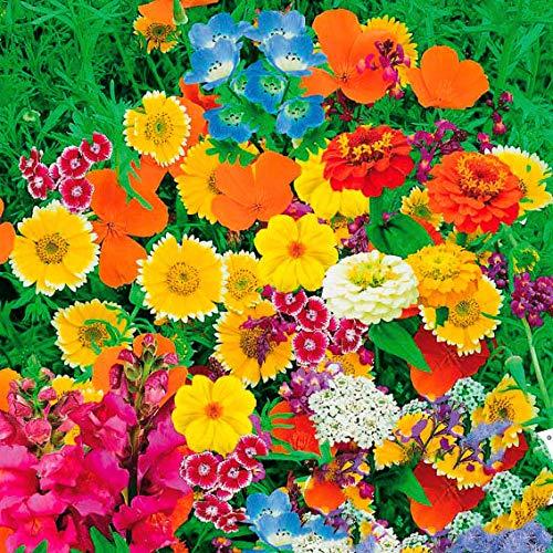 Tomasa Samenhaus- 220 Stücke Wildblumen Mischung wachsen schnell, Wildblumen - Wiese Nature Blumensamen mischend mehrjährig Saatgut Blumen bienenfreundlich für Balkon, Garten