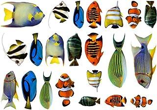 Samunshi® Fischaufkleber Set Aufkleber 22 teiliges Set Sticker Mehrfarbig