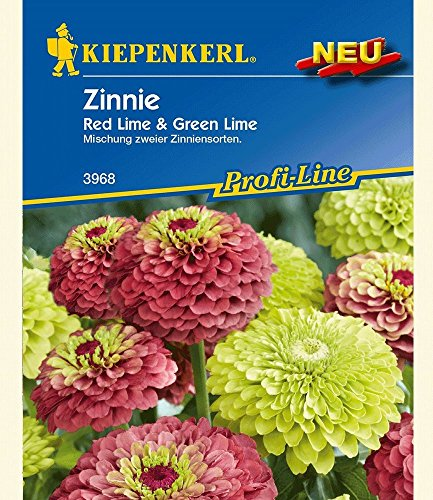 Zinnie \'Red Lime & Green Lime\',1 Portion