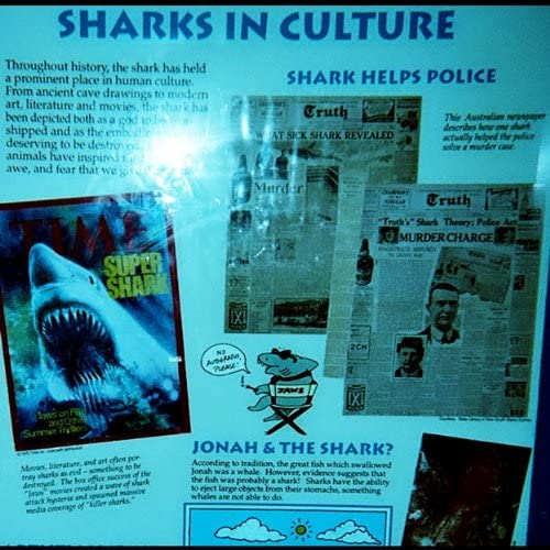 Sharks' Teeth
